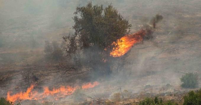 Chile: diez muertos y dos desaparecidos por incendios forestales