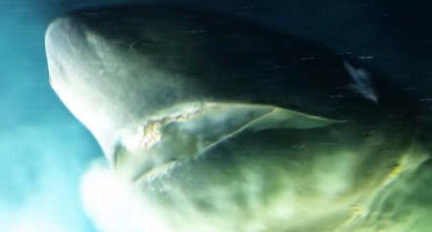 Hallaron a un tiburón de más de 200 años vivo