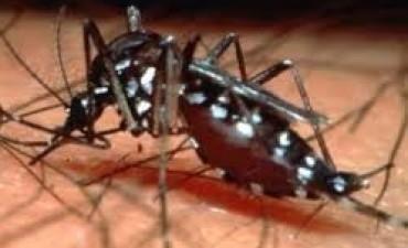 Confirman el octavo caso de dengue