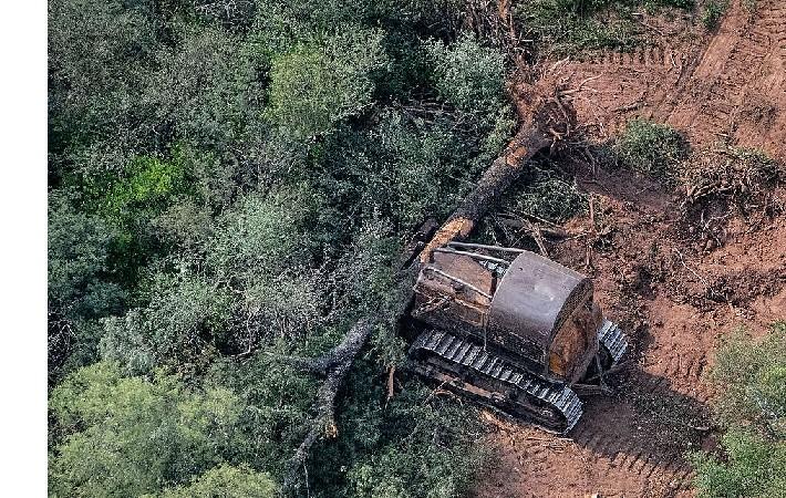 La pandemia no frenó las topadoras y en 2020 aumentó la deforestación en el norte