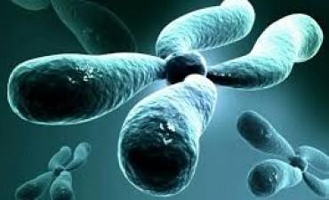 Concluyen que un gen del Cromosoma 21 podría minimizar riego de sufrir cáncer
