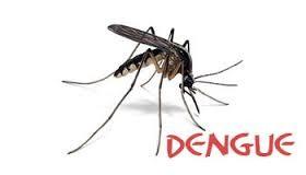 Trabajo intensivo en la prevención del Dengue