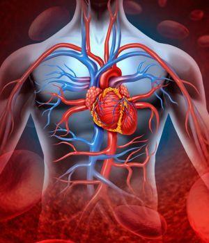 Descubren un nuevo órgano en los seres humanos
