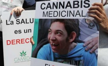 Autorizaron  por primera vez en Argentina el cultivo domiciliario de cannabis con fines medicinales