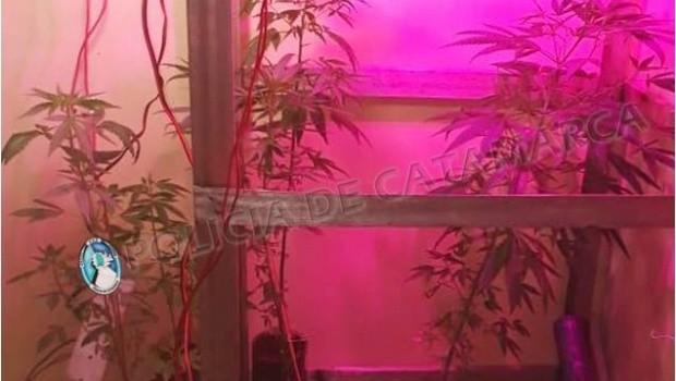 """Denuncia por """"grooming"""" terminó con el secuestro de 10 plantas de marihuana"""
