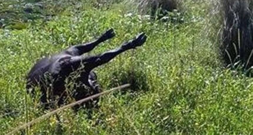 Mueren un hombre y su caballo electrocutados en La Paz