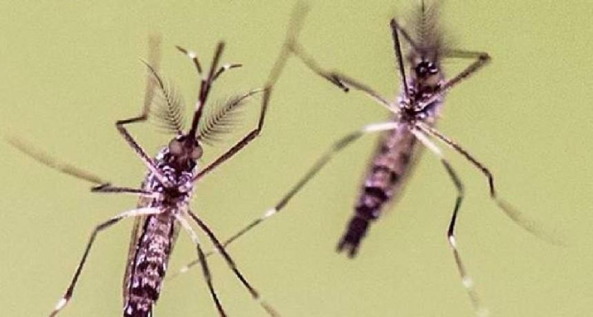 Nuevo caso de dengue en la provincia