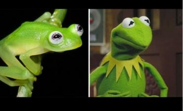 Científicos descubren en Costa Rica a la verdadera rana René