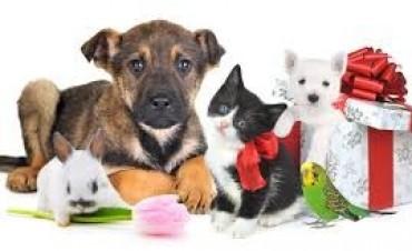 Porque hoy,29 de Abril  es el Dia del Animal?