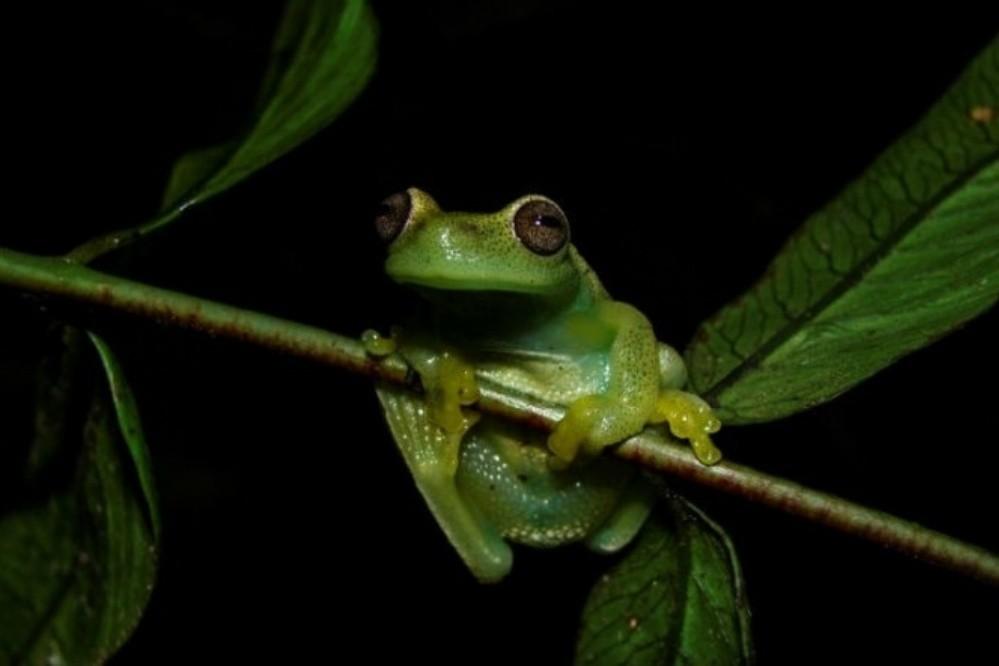 La naturaleza no deja de sorprender: descubrieron una nueva especie en Venezuela