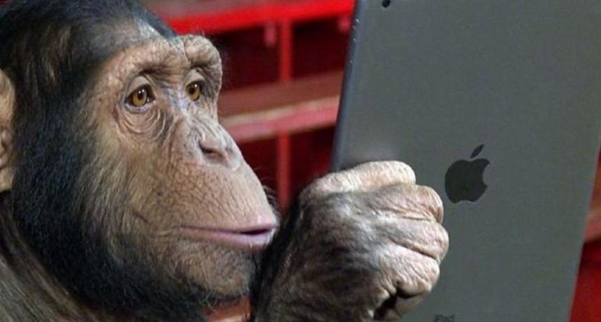 Furor por chimpancé que stalkea a full en Instagram