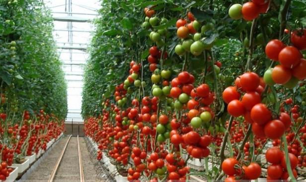 Más del 40% de los productores bonaerenses utilizan principios activos