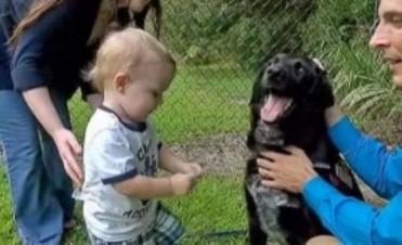 Perro delata a niñera que Maltrataba a un Bebé