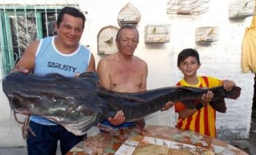 Pescaron un Surubí de 40 kilos