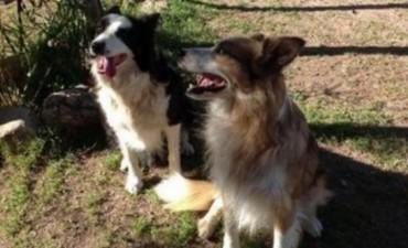 Dos perros salvaron a una adolescente de 13 años de ser violada