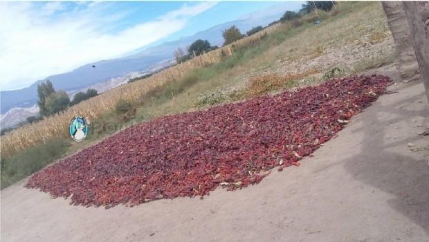Un menor involucrado en el robo de  más de 70 kilos de pimiento en Santa María