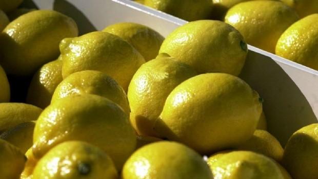 Unas 900 pallets de limones se exportan por primera vez a Estados Unidos