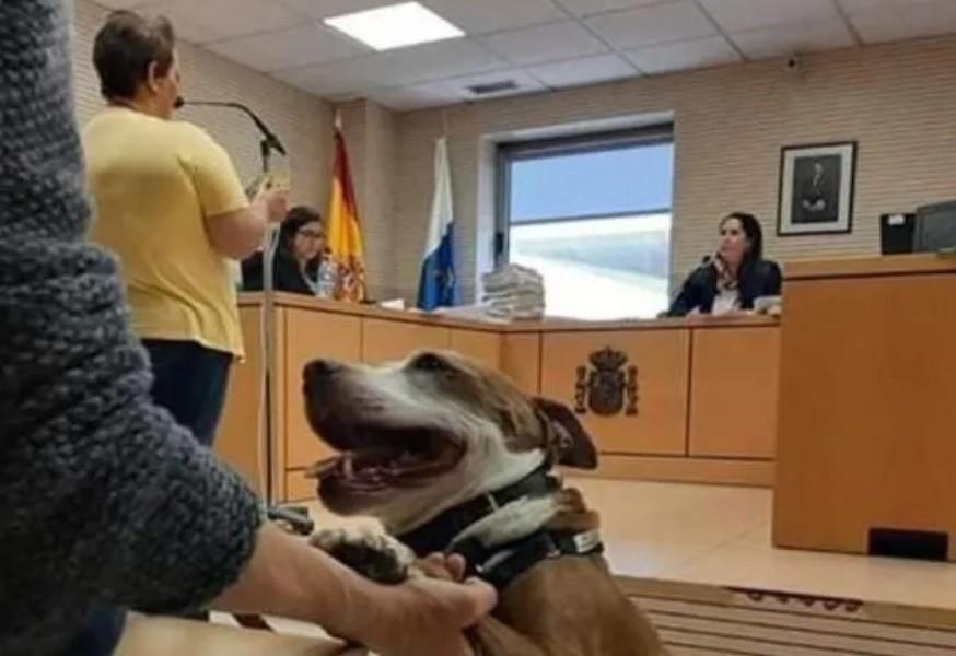 Guau: perra es testigo en un juicio por maltrato animal