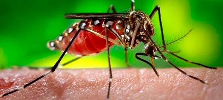 Confirman caso de dengue positivo en Catamarca