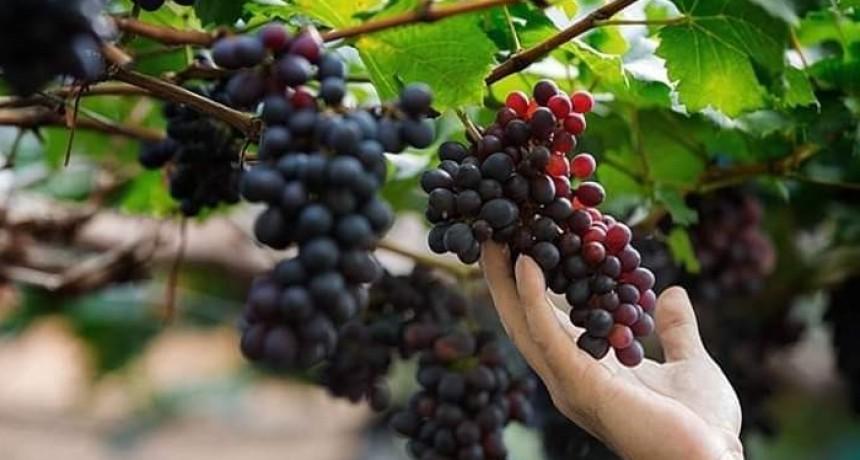 Entrega de subsidios a productores vitivinícolas de Tinogasta