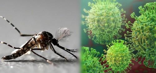 Catamarca sigue sin coronavirus pero se registraron 18 casos nuevos de dengue