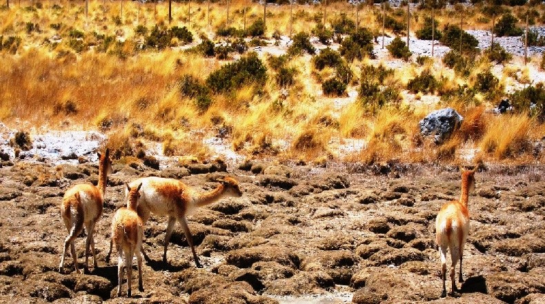 La Secretaría de Medio Ambiente en Laguna Blanca