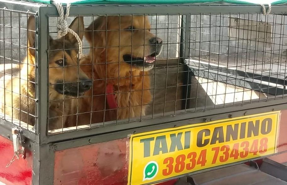 Innovador: por primera vez en Catamarca, ofrecen el servicio de taxis caninos