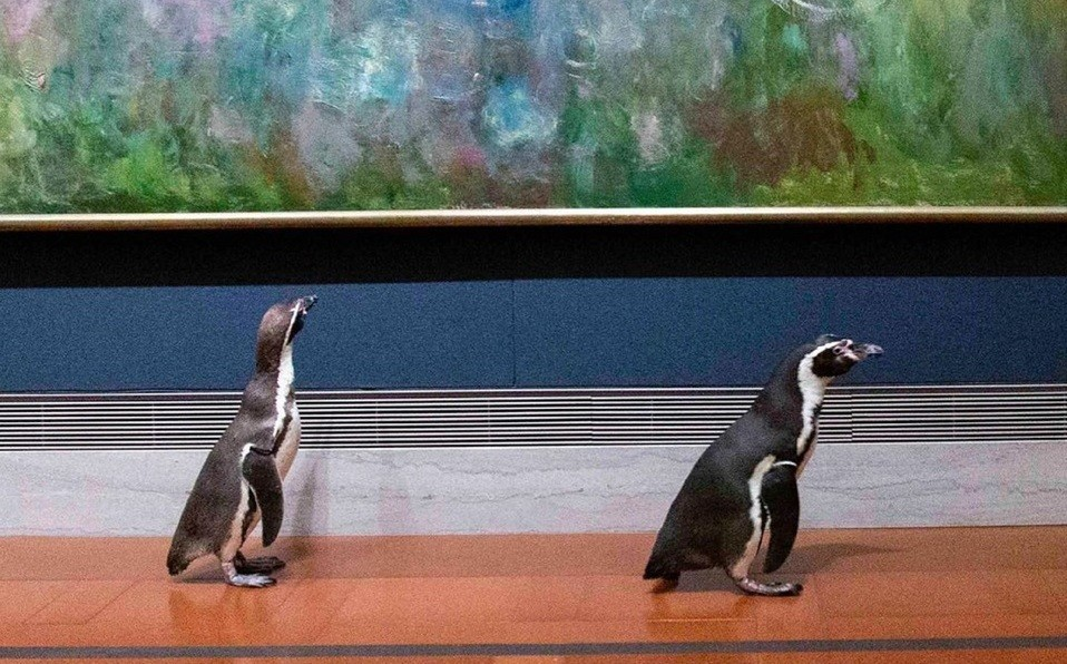 Pingüinos visitaron un museo