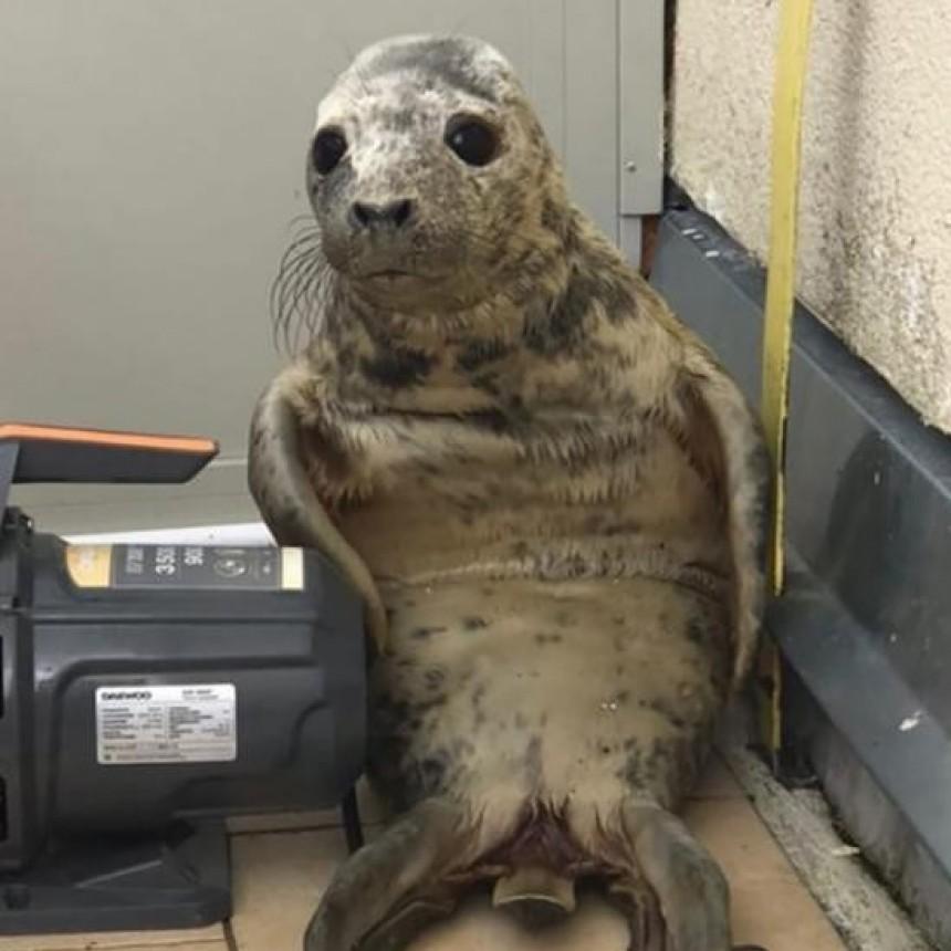 La tierna fuga de una foca bebé que es furor en las redes