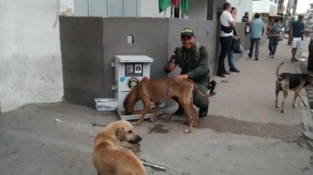 COLOMBIA: Instalan el Primer Comedero para Perros y Gatos Callejeros