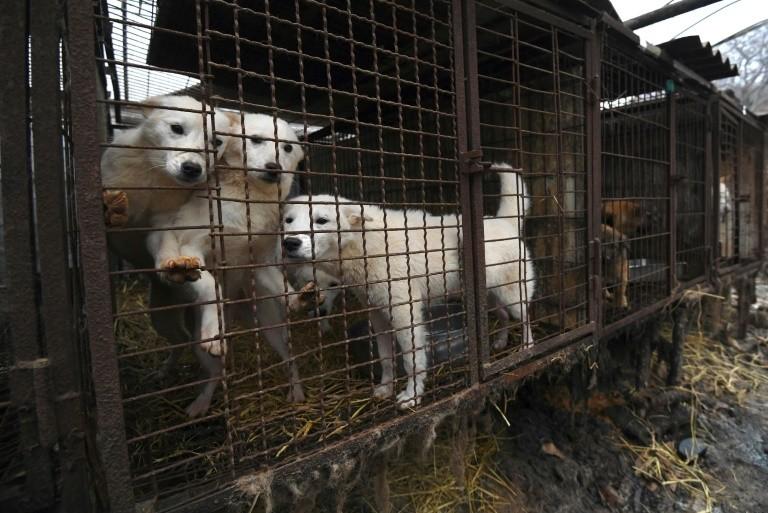 Prohíben matar perros para comerlos en Corea del Sur