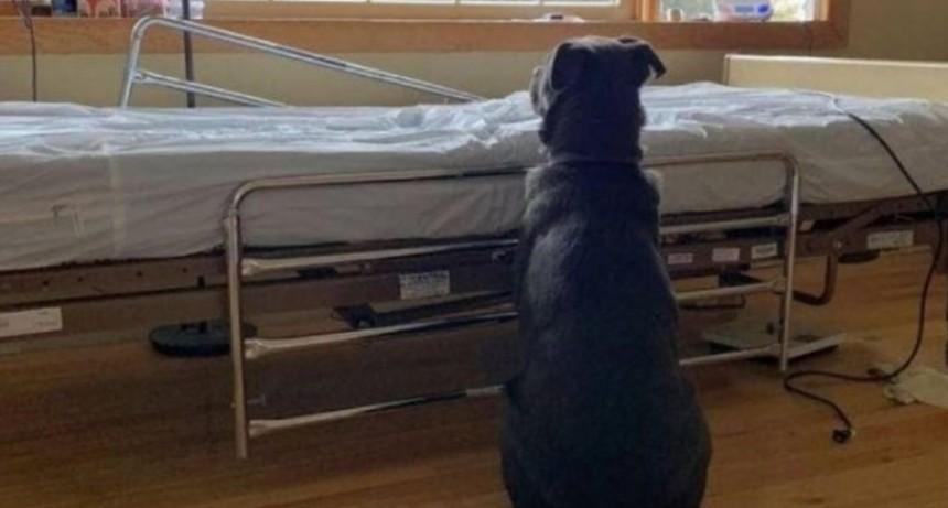 La desgarradora foto del perro que espera a su dueño muerto junto a la cama de un hospital