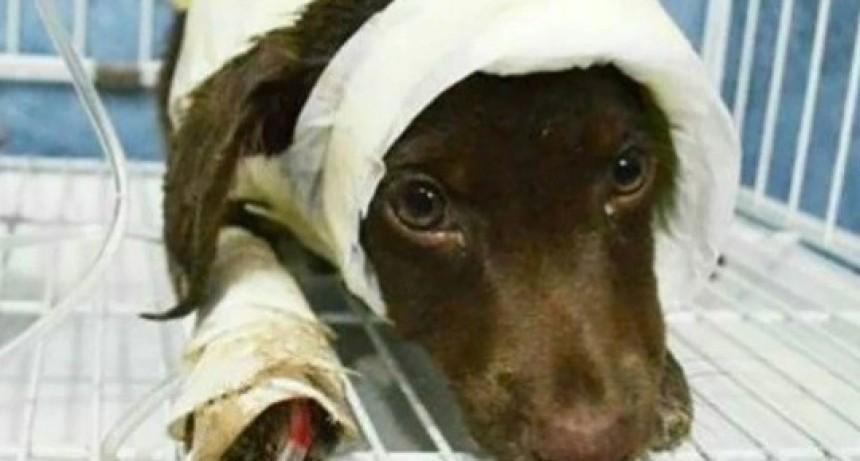 Aplicarán fuertes multas para quienes maltraten o abandonen a sus mascotas