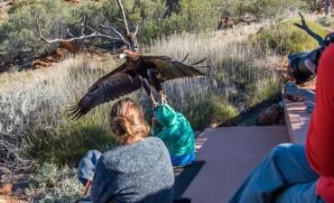 El impactante momento en el que un águila trata de llevarse a un niño en Australia