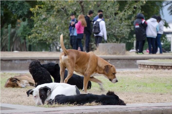 Perritos callejeros envenenados fueron encontrados en la Alameda