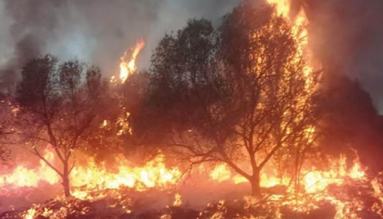 Voraz incendio en una finca de olivos en Chumbicha