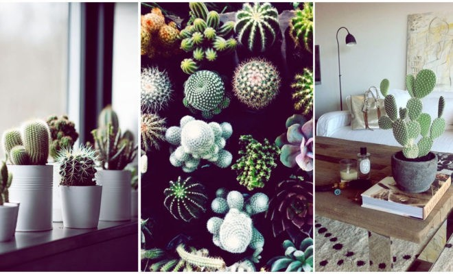 Tener cactus en casa es de mala suerte… ¿verdad o mito?