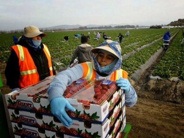 Trabajadores golondrinas tendrián prohibido el ingreso a la provincia