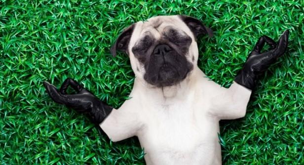 ¿Cómo detectar si tu mascota tiene problemas emocionales?