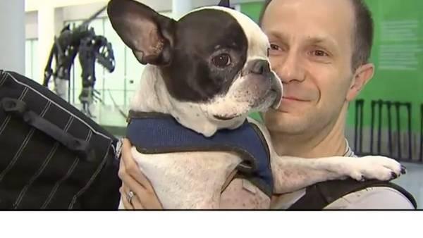 Un piloto desvió su vuelo para salvarle la vida a un perro