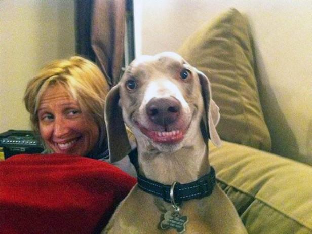 De tal perro tal dueño: animales imitando a sus dueños y viceversa