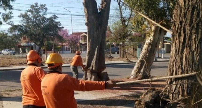 Limpieza y poda de árboles en inmediaciones de la Maternidad