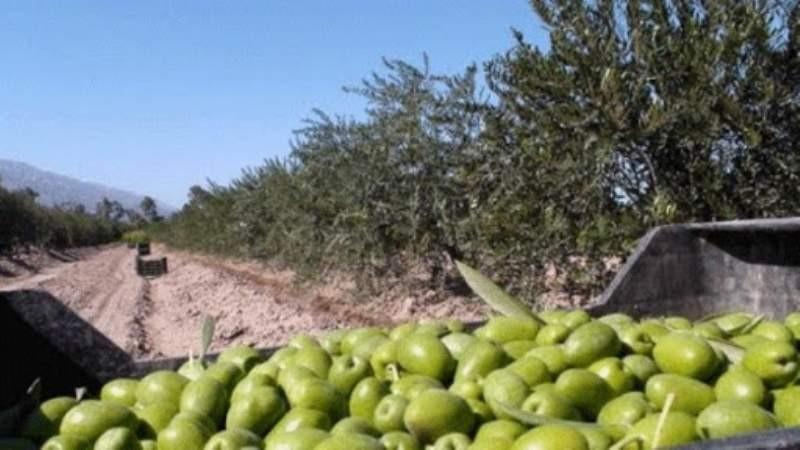 Beneficiarios del IFE se postulan para la cosecha en Catamarca