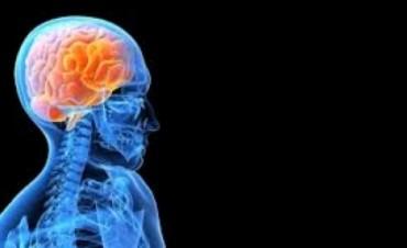 Una nueva alternativa contra la Epilepsia
