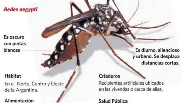 Confirmaron tres casos de dengue en Tucumán