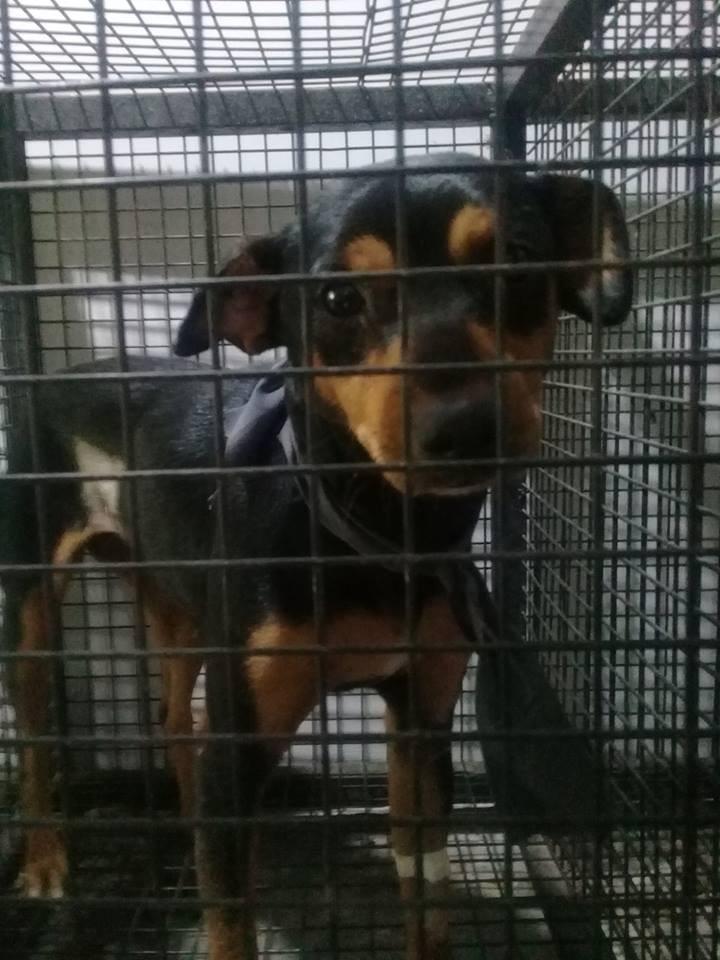La perrita abandonada en un centro de castración fue adoptada