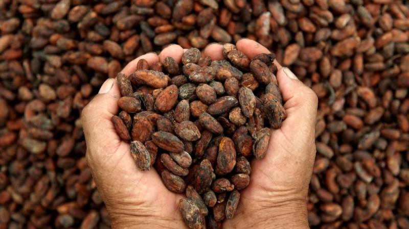 Científicos hallaron el verdadero nacimiento del chocolate