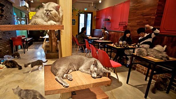 CAT CAFE: bares para gatos