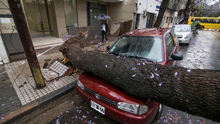 Tormenta en Rosario: mirá los destrozos causados por árboles caídos