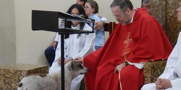 Este sacerdote invita a misa los domingos a los perros de la calle